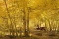 Картинка осень, камни, листва, жёлтая, лесок, берёзовый, залитый солнцем