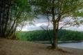 Картинка природа, река, фото, Германия, березы, North Rhine-Westphalia