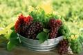 Картинка ягода, тазик, виноград, грозди, зеленый, лист