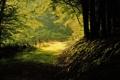 Картинка лес, лето, природа, тени