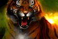 Картинка тигр, ярость, клыки, оскал, art, Bengal Tiger