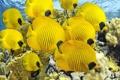Картинка аквариум, море, рыбы