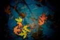 Картинка осень, листья, цвета, фото, фон, обои, лужа