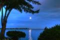 Картинка небо, вода, отражение, дерево, луна, берег, вечер