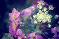 Картинка цветок, фиолетовый, макро