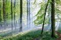 Картинка лес, пейзаж, свет, деревья