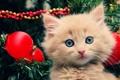 Картинка котенок, праздник, елка