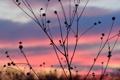 Картинка небо, облака, макро, закат, растение, силуэт