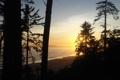 Картинка природа, лес, берег, рассвет