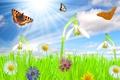 Картинка лето, небо, трава, солнце, облака, лучи, цветы