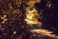 Картинка осень, тропа, кусты