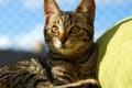 Картинка кот, солнце, отдых, котэ, лежа