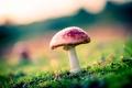 Картинка трава, гриб, боке