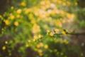 Картинка цветы, ветка, желтые, лепестки