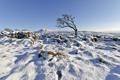 Картинка зима, небо, снег, дерево, Англия, Великобритания, Северный Йоркшир