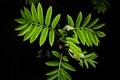 Картинка листья, капли, зеленый, черный