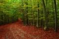 Картинка дорога, осень, лес, листья, деревья, природа, фото