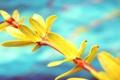 Картинка небо, макро, цветы, желтый