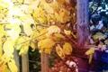 Картинка осень, листья, сентябрь