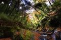 Картинка зелень, лес, солнце, деревья, река, ручей, камни