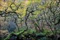 Картинка лес, деревья, камни, мох, изогнутые