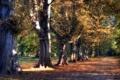Картинка дорога, деревья, парк