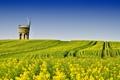 Картинка поле, небо, мельница, рапс