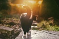 Картинка кошка, кот, черно-белый, лапки, хвост