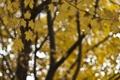 Картинка осень, листья, макро, блики, фокус, Дерево, желтые