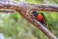 Картинка природа, ветка, размытость, попугай