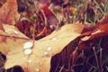 Картинка капли, осень, трава
