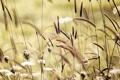 Картинка поле, лето, трава, природа