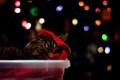 Картинка кошка, фон, праздник