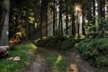 Картинка солнце, лес, лучи, дорога, бревна