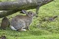 Картинка бревно, профиль, трава, кролик
