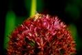 Картинка цветок, пчела, Top of the World