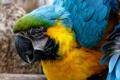 Картинка макро, краски, перья, клюв, попугай