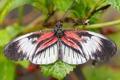 Картинка макро, роса, бабочка