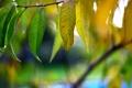 Картинка зелень, осень, лес, листья, макро, желтый, природа