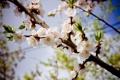 Картинка цветы, настроение, весна
